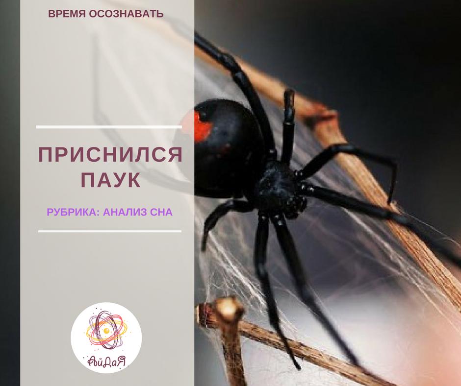 К чему беременной снятся пауки